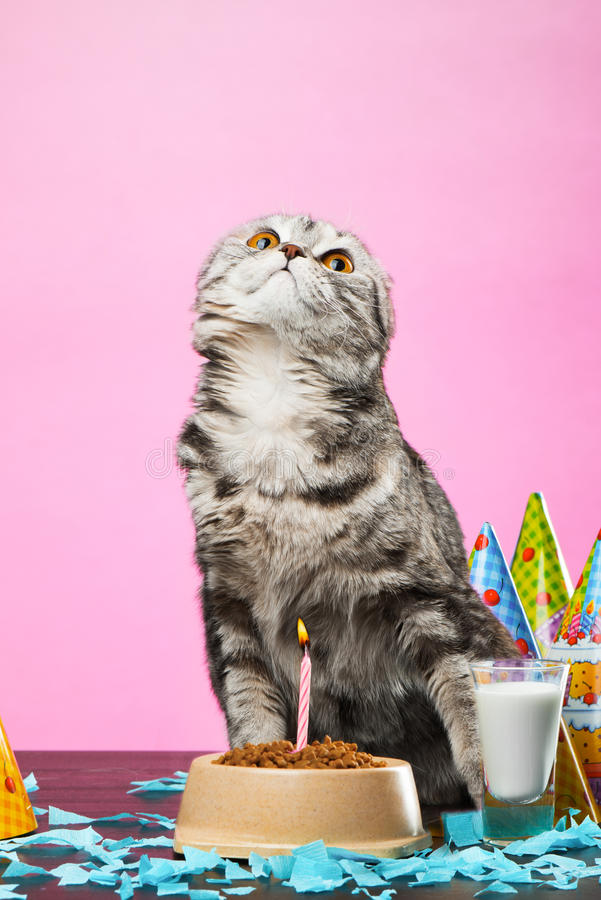 Birthday cats. On a pink background royalty free stock images