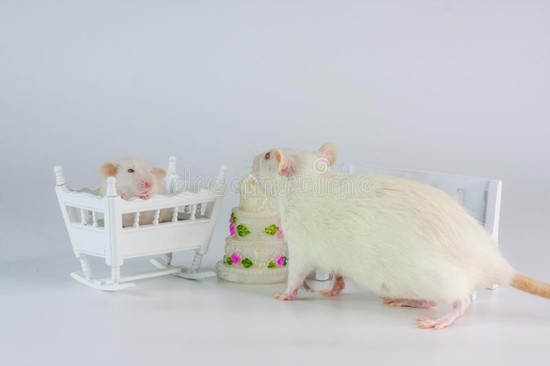 Birthday concept. Rats on the background of the cake. royalty free stock photo