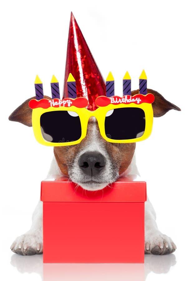 Birthday dog. Dog as a birthday present stock photos