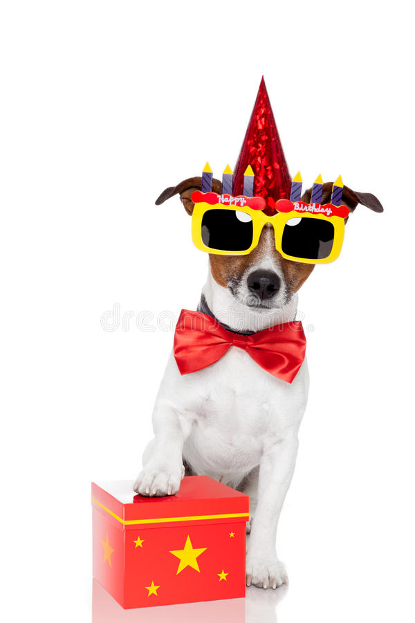 Birthday dog. With a red box royalty free stock images