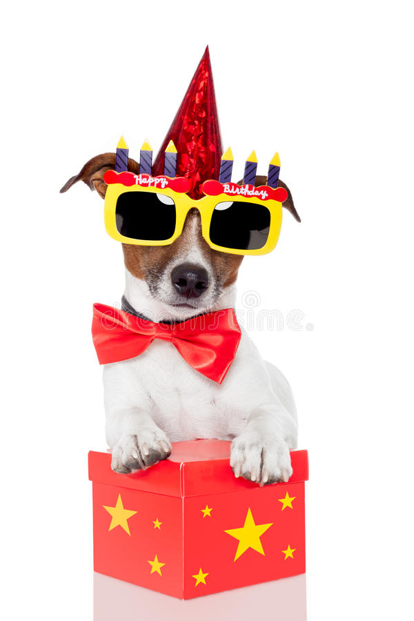 Birthday dog royalty free stock photos