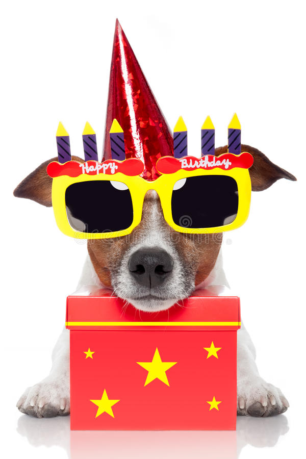 Birthday dog. With a red box stock photography