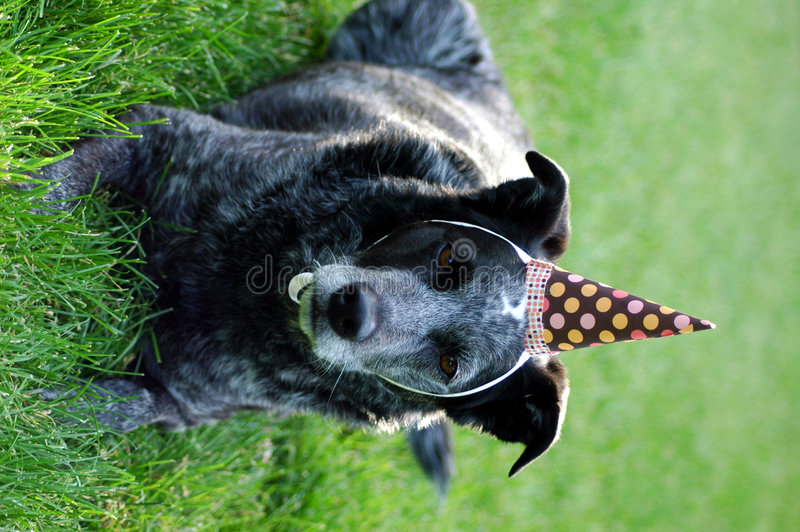 Download Birthday Dog stock photo. Image of birthday, party, blue - 5368774