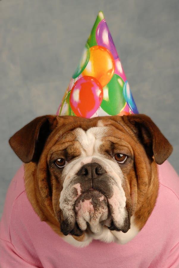 Birthday dog stock images