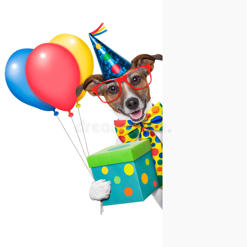 Birthday dog. With balloons behind a white placard stock image