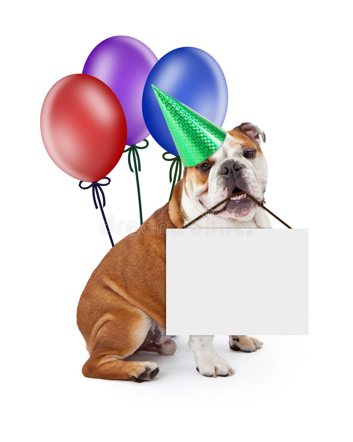 Birthday Dog Holding Blank Sign With Balloons stock image