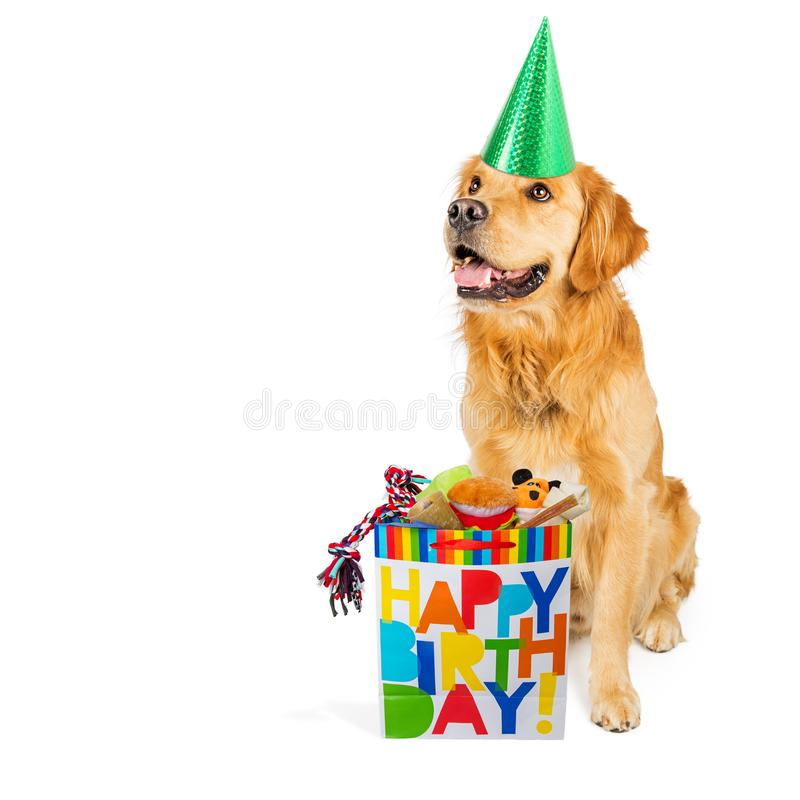 Birthday Dog With Present. Happy Golden Retriever dog wearing a party hat with a birthday gift bag full of toys and treats stock image