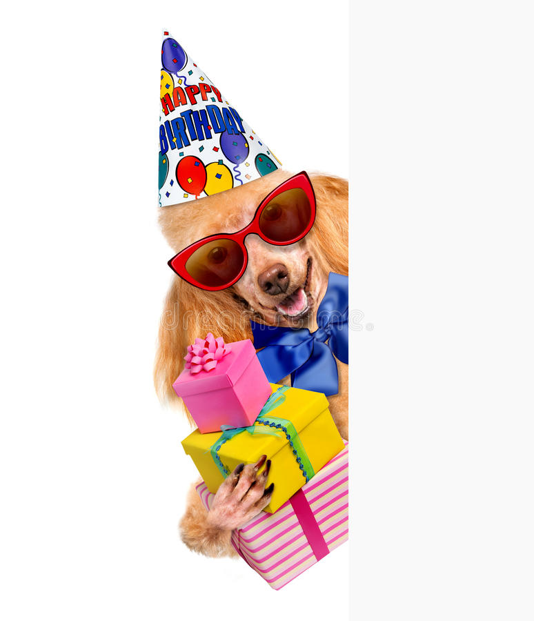 Birthday dog with presents. On a white background royalty free stock photos
