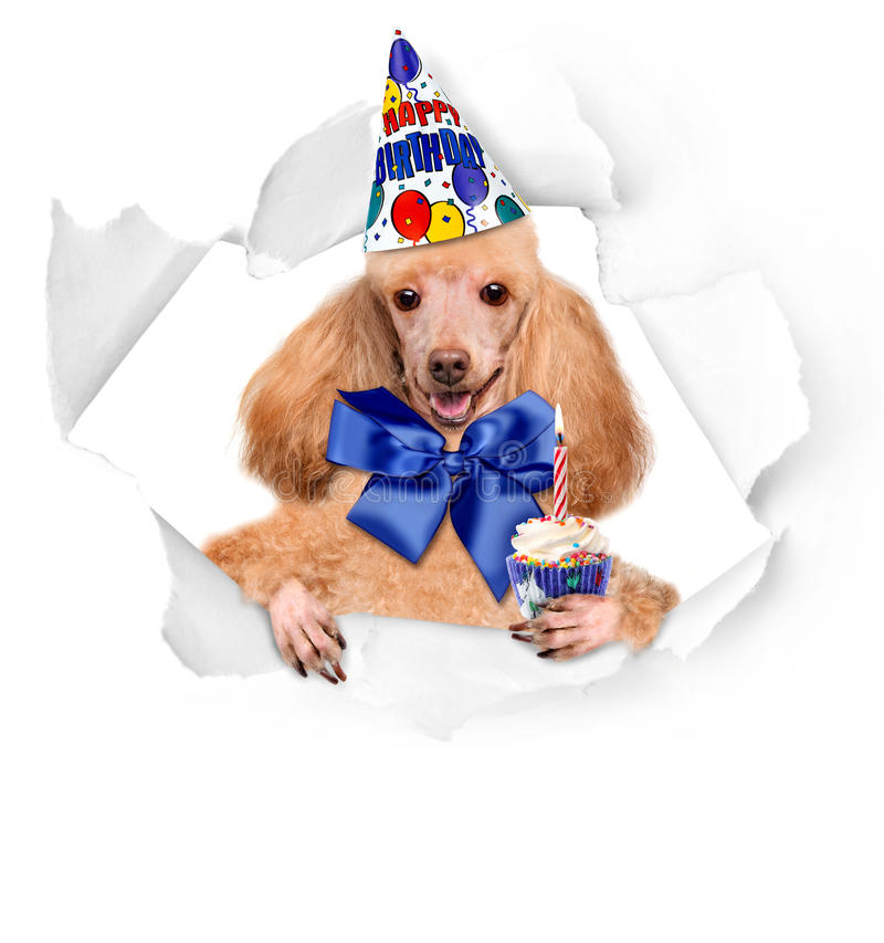 Birthday dogs with a cupcake. On a white background stock photo