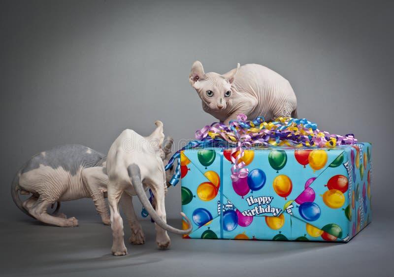 Download Birthday elves stock image. Image of mammal, wrinkle - 26551661