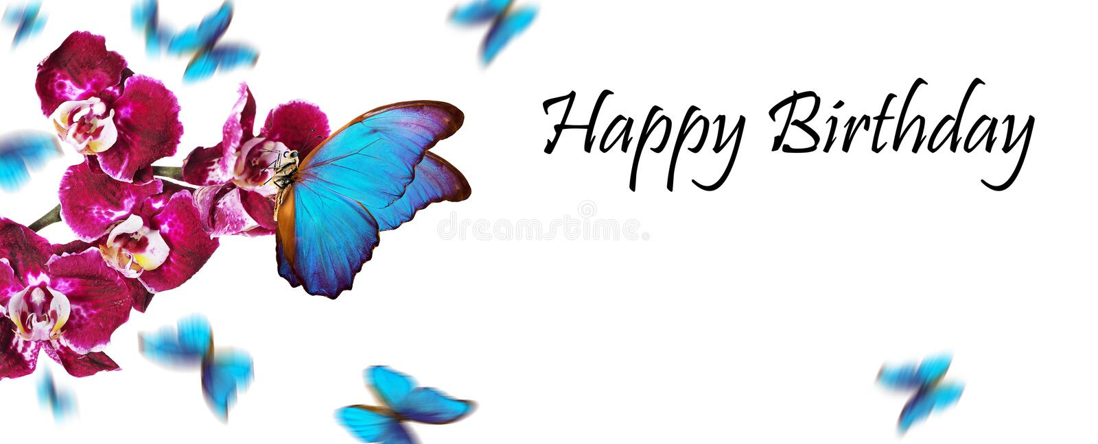 Birthday greeting card. colorful flying butterflies. tropical nature. bright blue tropical morpho butterflies on colorful orchid f. Lowers isolated on white royalty free stock photos