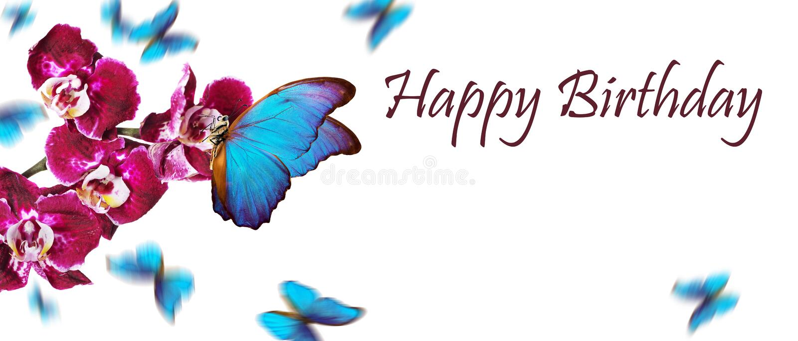 Birthday greeting card. colorful flying butterflies. tropical nature. bright blue tropical morpho butterflies on colorful orchid f. Lowers isolated on white stock photos