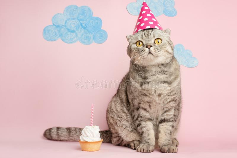 Birthday greetings from a cat.  stock photos