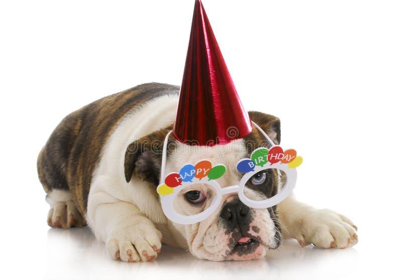Birthday puppy stock photography