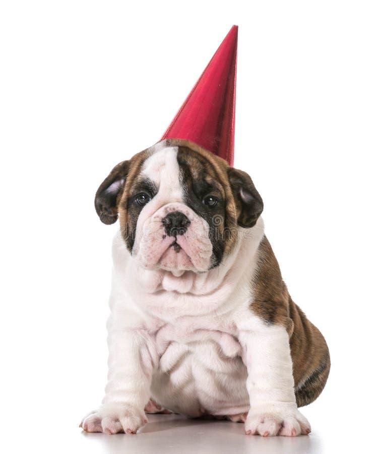 Birthday puppy stock photo