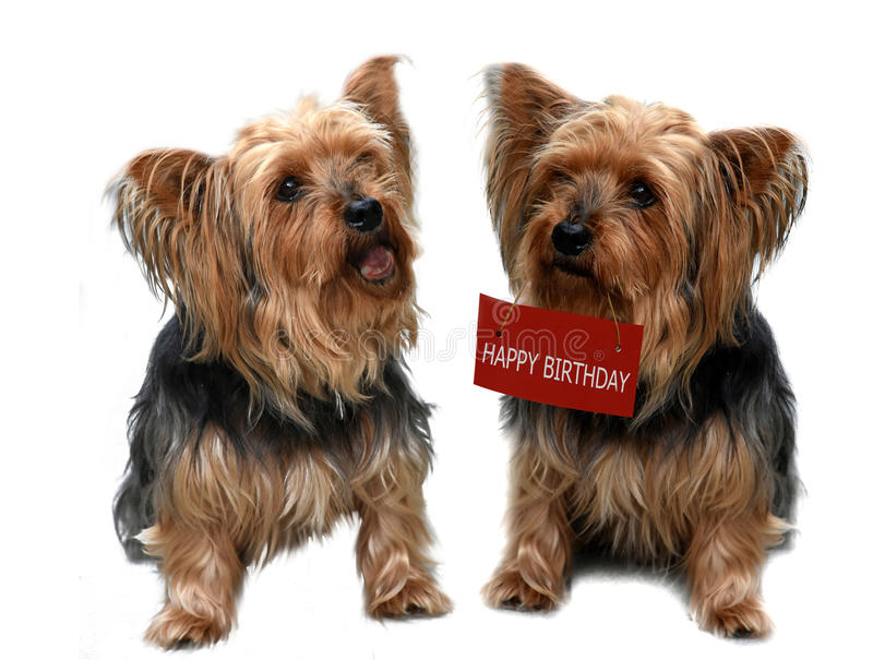 Birthday serenade royalty free stock photos