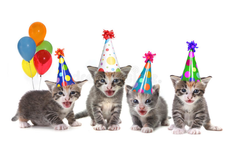 Birthday Song Singing Kittens On White Background Stock Images