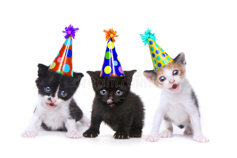 Birthday Song Singing Kittens on White Background. Singing Kittens on a White Background With Birthday Hats royalty free stock photos