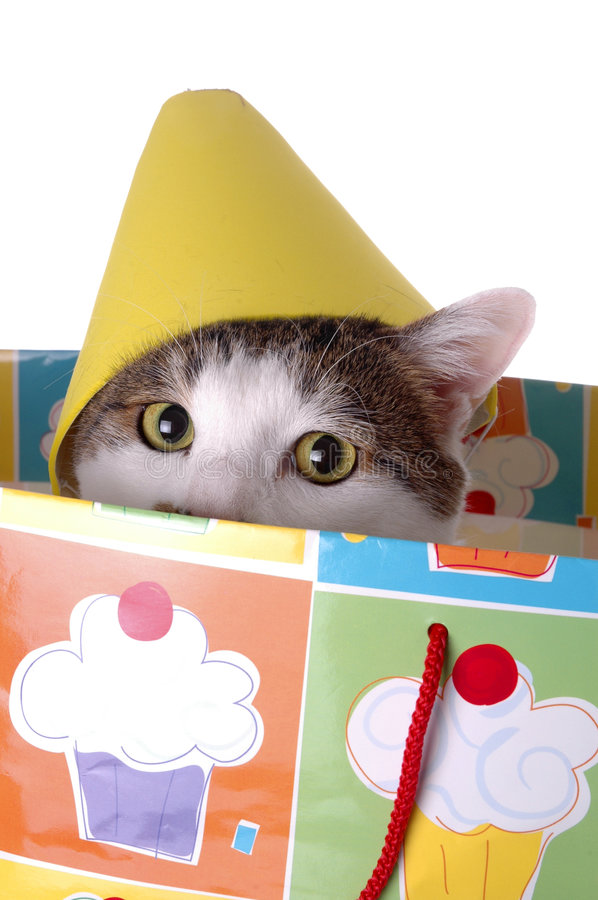 Birthday Surprise 5. An adorable cat with a birthday hat. The cat is sitting in a gift bag stock photos