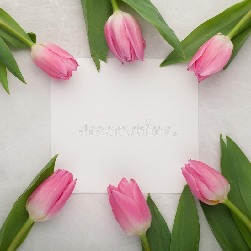 Birthday or wedding mockup with white paper list, pink tulip flowers on blue background top view. Beautiful woman day card. Flat l stock photography