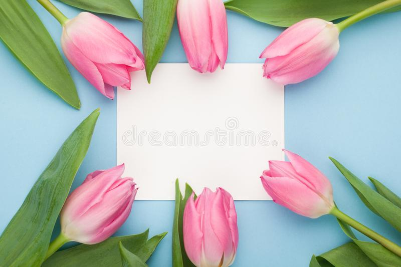 Birthday or wedding mockup with white paper list, pink tulip flowers on blue background top view. Beautiful woman day card. Flat l. Ay royalty free stock photo