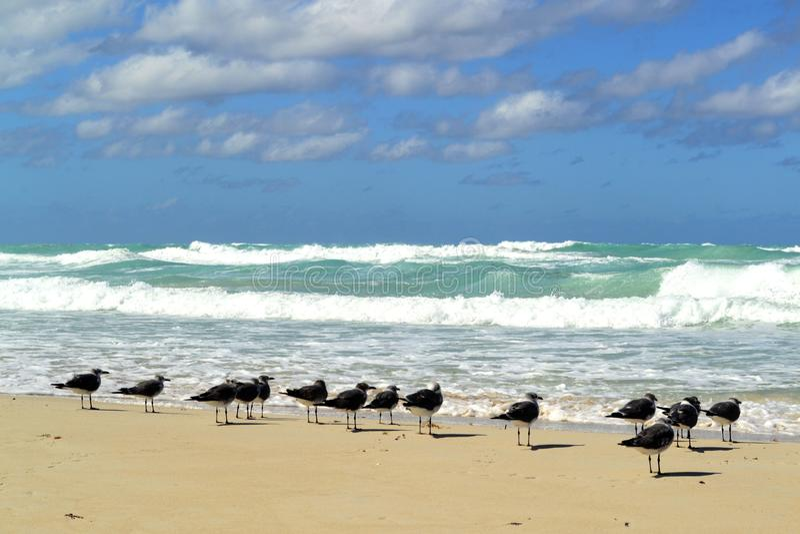 Birts στην παραλία Varadero, Κούβα στοκ εικόνες