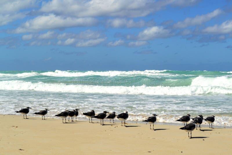 Birts на пляже Варадеро, Куба стоковые изображения