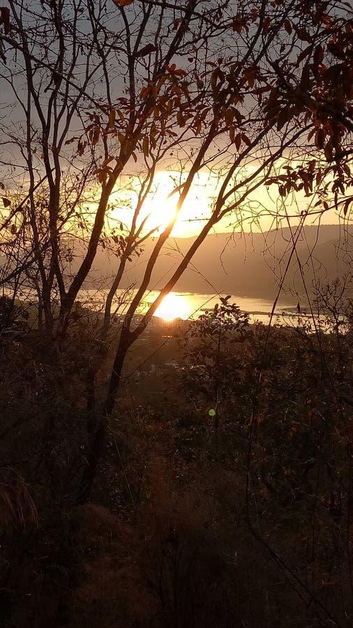 Bis Dämmerung im Wald lizenzfreie stockbilder