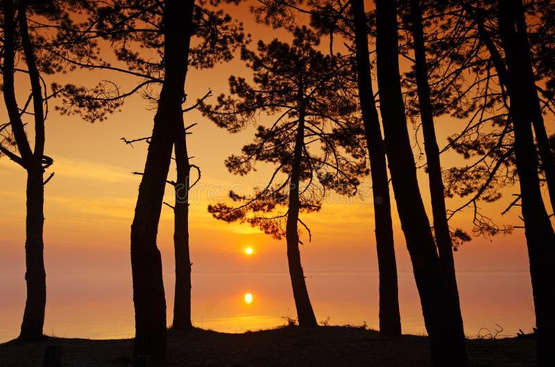 Biscarosse Landes jezioro lasowy i zdjęcia royalty free