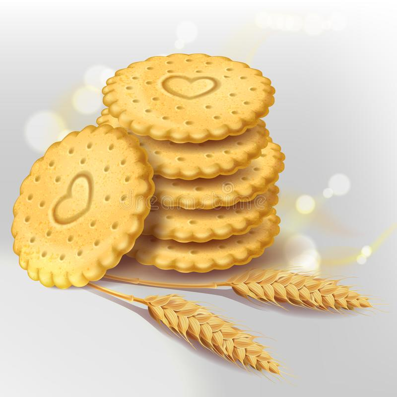 Biscuit cookies or whole wheat cracker vector illustration