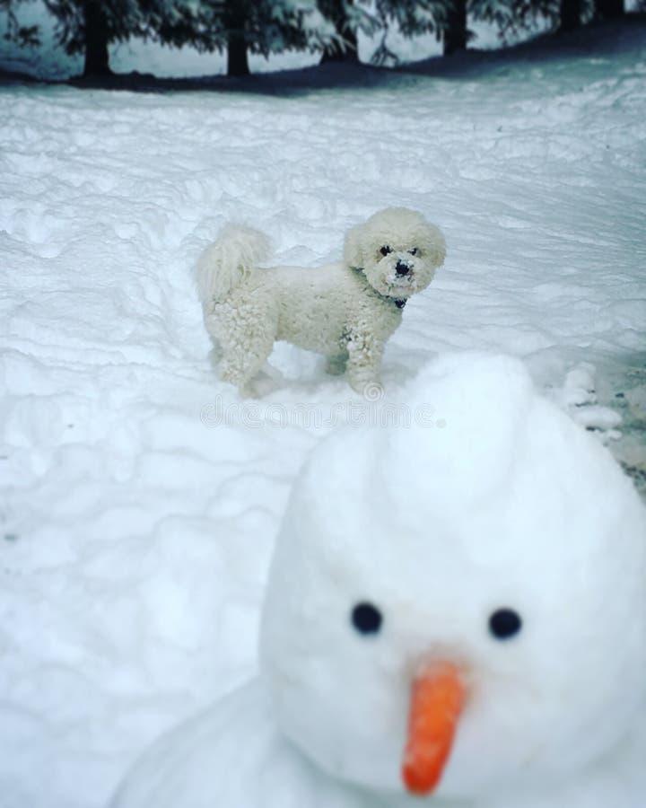 Bishon和雪人 库存照片