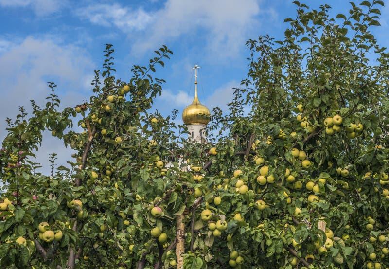BiskopApple fruktträdgård fotografering för bildbyråer