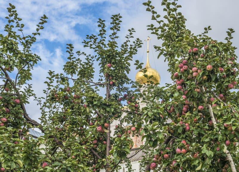 BiskopApple fruktträdgård royaltyfri bild