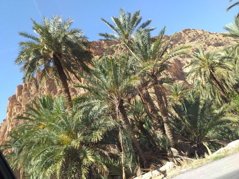 Biskra Algérie photos libres de droits