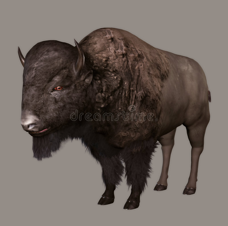 Free Bison Stock Image - 5638711