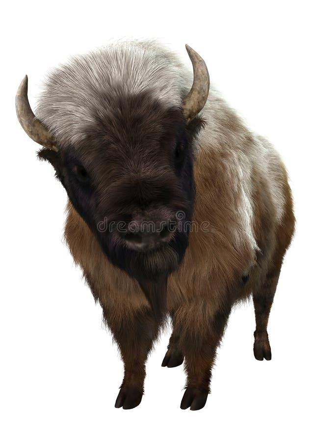 Bison américain illustration de vecteur