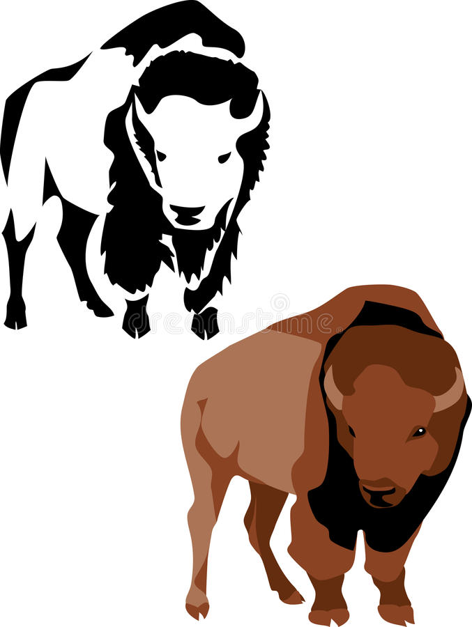 Bison. American bison - colored illustration and black illustration stock illustration