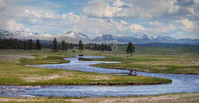 Bison bei Yellowstone lizenzfreies stockbild