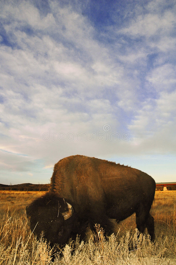 Download Bison With Big Sky Background Royalty Free Stock Photo - Image: 515725