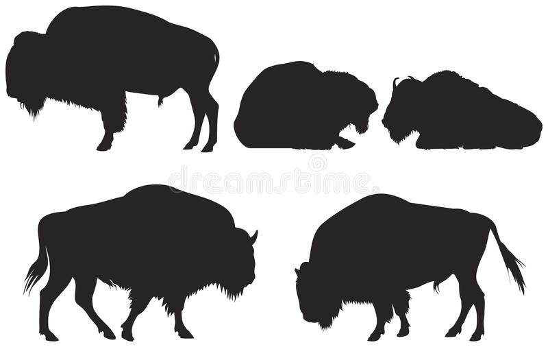 Bison or Buffalo. Bison group vector Silhouettes, American bison or American buffalo from the Wild West series