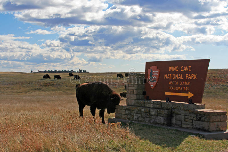Bison Buffalo scratching head on the Wind Cave National Park sign in the Black Hills of South Dakota USA royalty free stock image