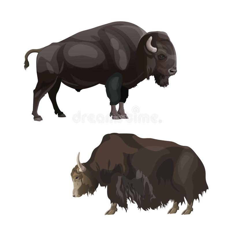 Bison et yaks illustration de vecteur