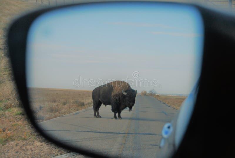 Bison i spegel fotografering för bildbyråer