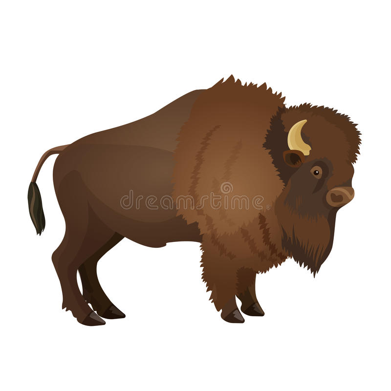 Bison large even-toed ungulate realistic vector illustration. Isolated on white background. Bull with horns terrestrial animal vector illustration