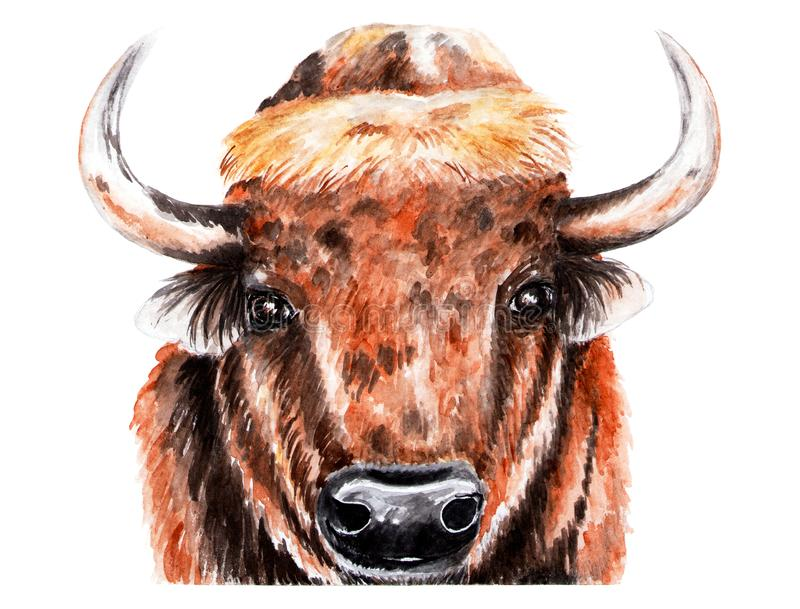 Portrait of bison. Watercolor illustration. royalty free stock photo