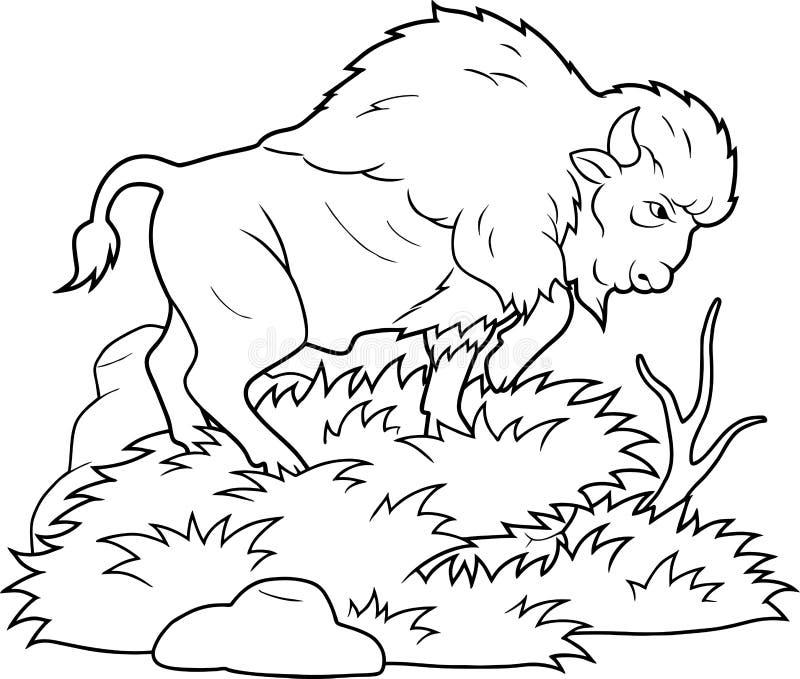 Bison marchant sur la prairie illustration de vecteur