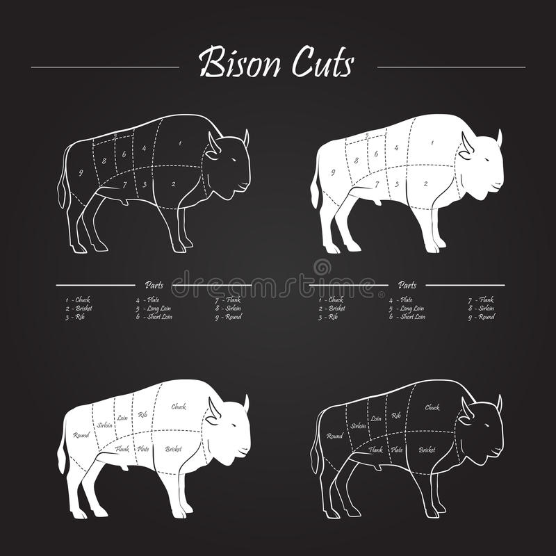 Bison Meat Cuts Scheme stock image