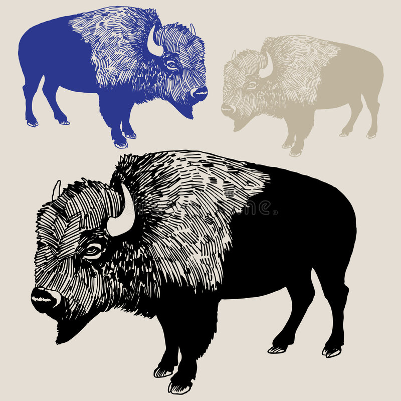 Bison ou Buffalo nord-américain illustration stock
