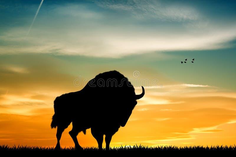 Bison At Sunset ilustração stock