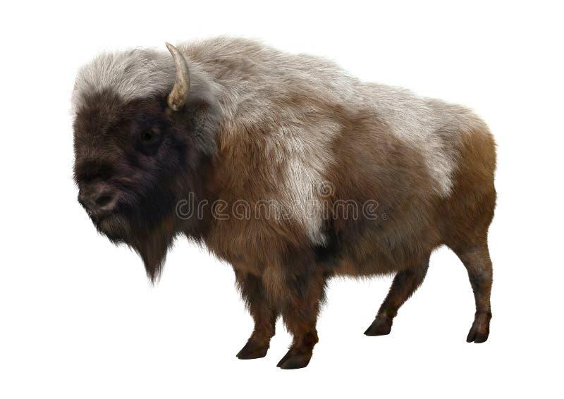 Bisonte americano stock de ilustración